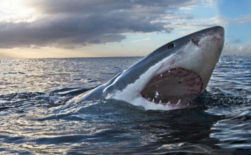 Δείτε τη στιγμή που καρχαρίας αρπάζει ψαρά πάνω σε σκάφος (video)