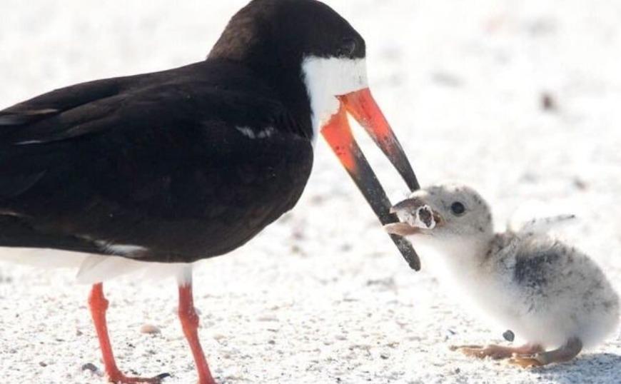 Η εικόνα πουλιού να ταΐζει το μωρό του αποτσίγαρο