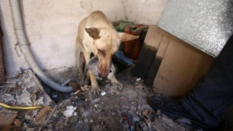 Η ηρωική σκυλίτσα-μάνα που έσωσε τα κουτάβια της στον Υμηττό