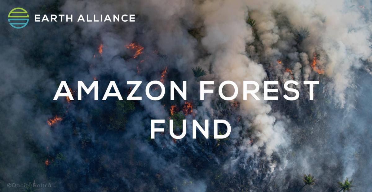 Λεονάρντο Ντι Κάπριο: 5 εκατ. δολάρια για τη διάσωση του Αμαζονίου