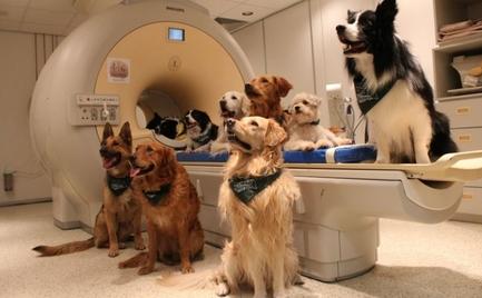 Τα σκυλιά αποτρέπουν τους φοιτητές από το να παρατήσουν τις σπουδές τους