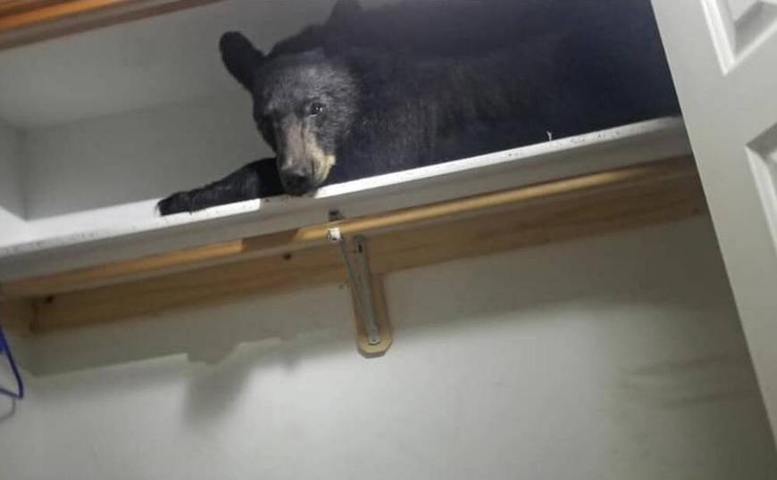 Τραγουδίστρια είχε στο σπίτι της αρκούδα