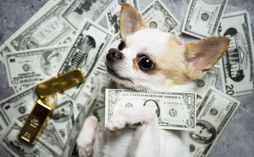 Pet influencers: Τα κατοικίδια που κερδίζουν χιλιάδες δολάρια στο Instagram